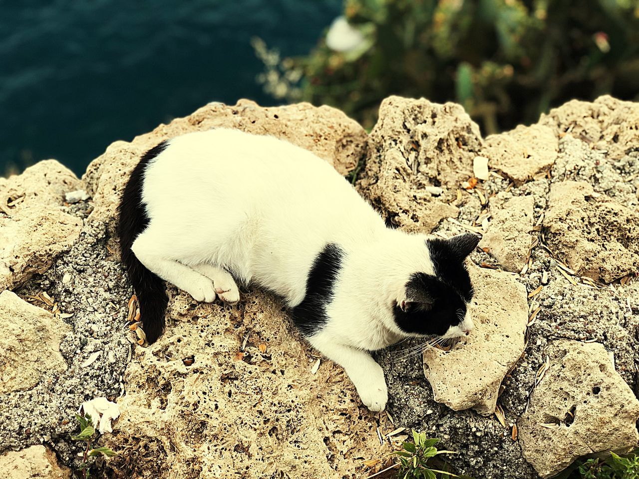 animal, animal themes, mammal, one animal, vertebrate, domestic animals, domestic, pets, solid, rock, no people, rock - object, nature, day, relaxation, focus on foreground, white color, cat, sunlight, domestic cat