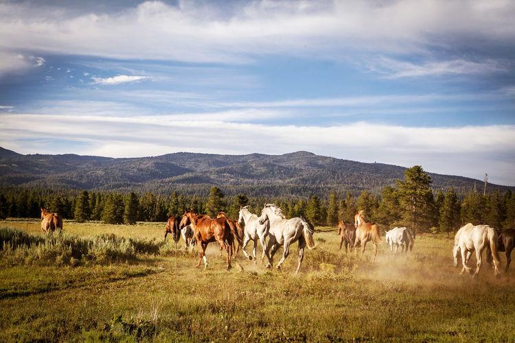 America Cowboy Cowboys Farm Horses Q Quadruped Showcase March USA