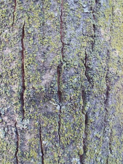 Life on tree Full Frame Backgrounds Textured  Pattern Close-up Rough No People Day Green Color Moss Outdoors Tree Trunk Tree Nature Sommergefühle The Week On EyeEm Peschiera Borromeo EyeEmNewHere Grass Beauty In Nature