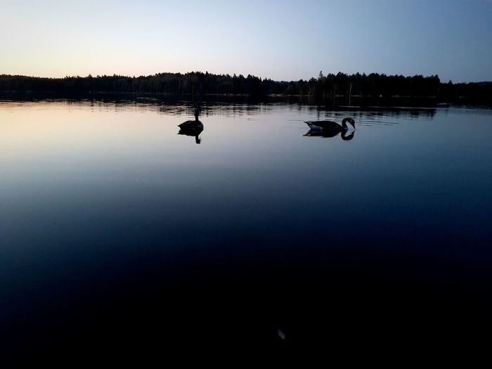 Nightphotography Nihgt View Bird Photography Outdoor Photography Rowing Men Sky