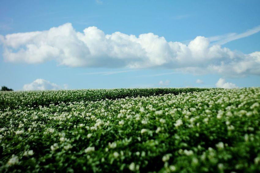 Heute ist mein Farbkasten ausgelaufen... Nature Photography My Point Of View Cloud - Sky Blue Tiltshift Irrigation Equipment Rural Scene Flower Agriculture Field Defocused Vegetable Sunlight Cultivated Cultivated Land Raw Potato