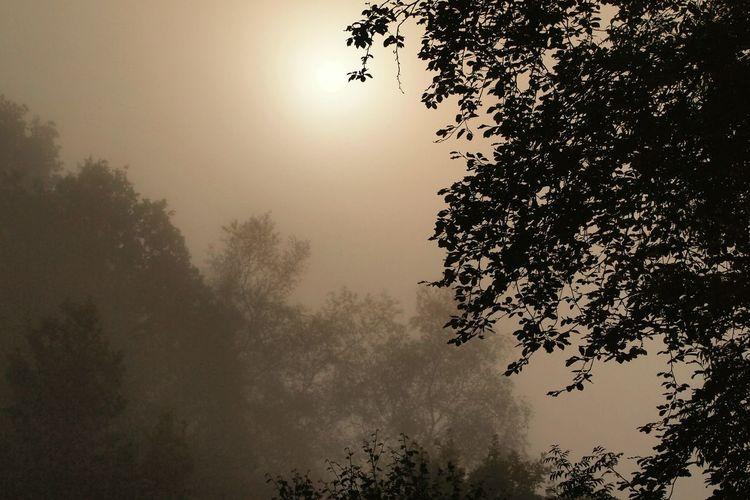 Fog early morning in Liskeard Scottishrowan Forest