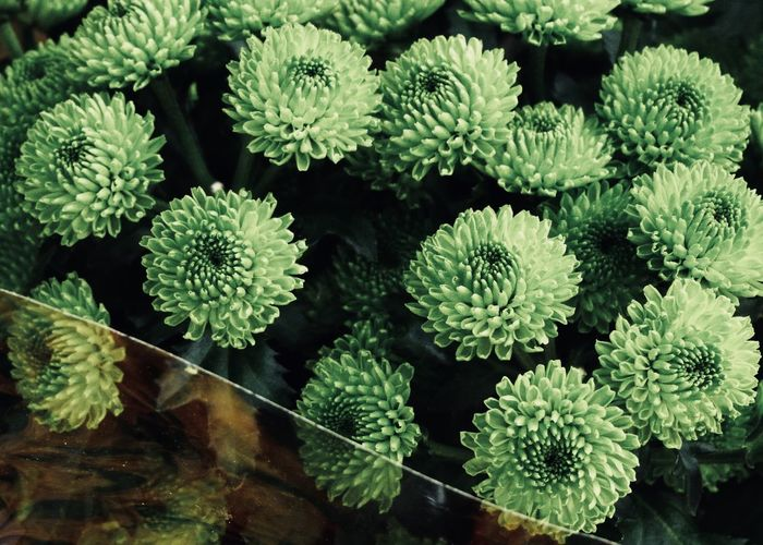 High angle view of green flowers