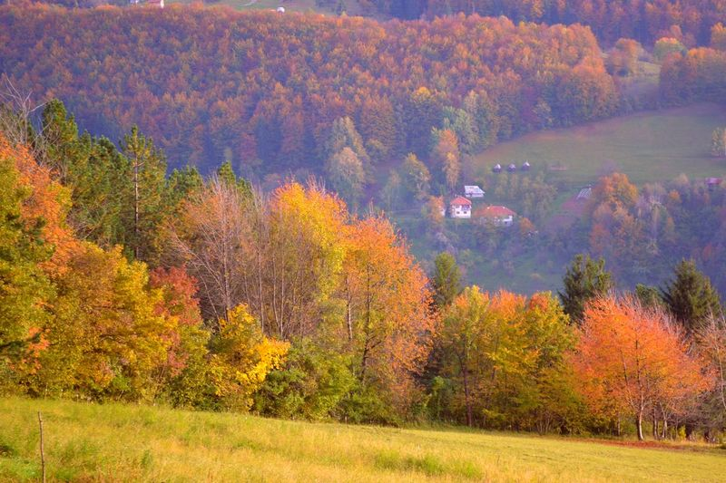 autumn Autumn Beauty In Nature Change Day Flower Forest Grass Growth Horizontal Landscape Mountain Multi Colored Nature No People Outdoors Plant Scenics Serbia Sunset Tree