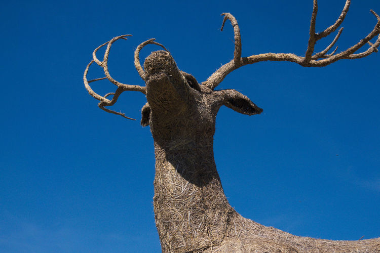 Low angle view of dead tree against blue sky