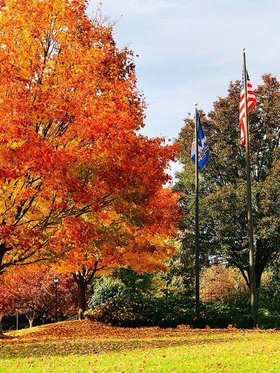Flag Sky Patriotism No People Nature Architecture Plant Day Tree Sunlight Outdoors Growth Orange Color