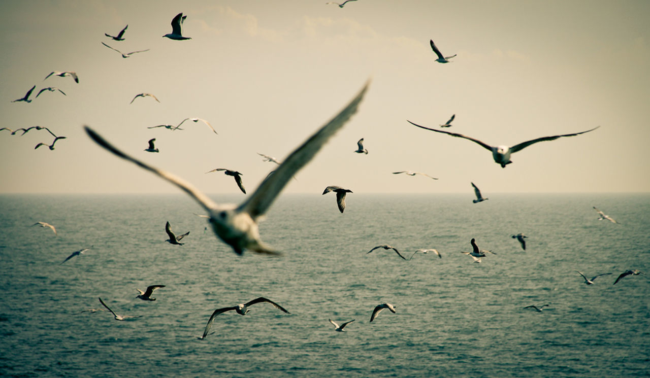 vertebrate, animals in the wild, flying, bird, animal wildlife, animal, animal themes, group of animals, water, large group of animals, spread wings, sea, sky, flock of birds, mid-air, nature, beauty in nature, no people, waterfront, horizon over water, seagull