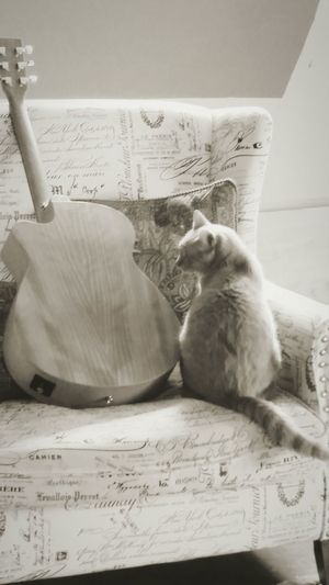 Cat Catoftheday Cat And Guitar Black And White Music Cat Music Hello Kitty