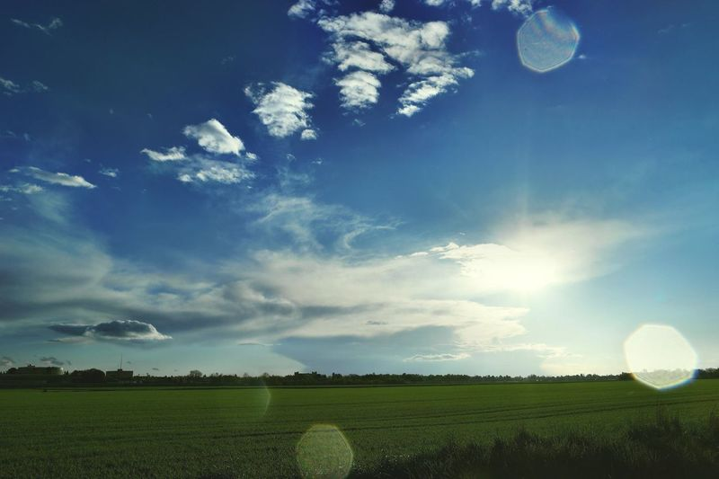 Agriculture Beauty In Nature Blue Cloud Cloud - Sky Day Field Grass Grassy Green Color Growth Horizon Over Land Idyllic Landscape Lens Flare Nature No People Outdoors Rural Scene Scenics Sky Sun Sunlight Tranquil Scene Tranquility