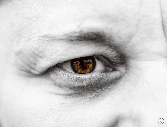 Human Eye Body