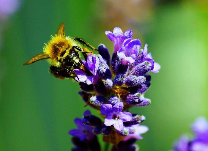 Canon Bee