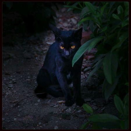 黑猫 Cat