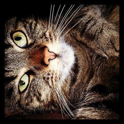 <3 piper <3 Fatcat