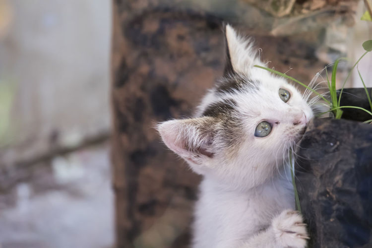 Animal Themes Cat Cat Lovers Cats Cat♡ Close-up Day Domestic Animals Domestic Cat Feline Focus On Foreground Looking At Camera Mammal No People One Animal Outdoors Pets Portrait