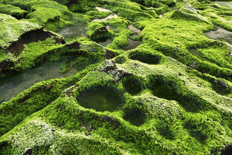 Full frame shot of moss growing on land
