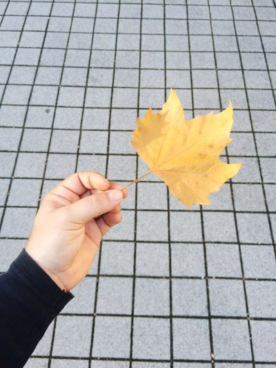 Cropped Hand Holding Autumn Leaf Against Footpath