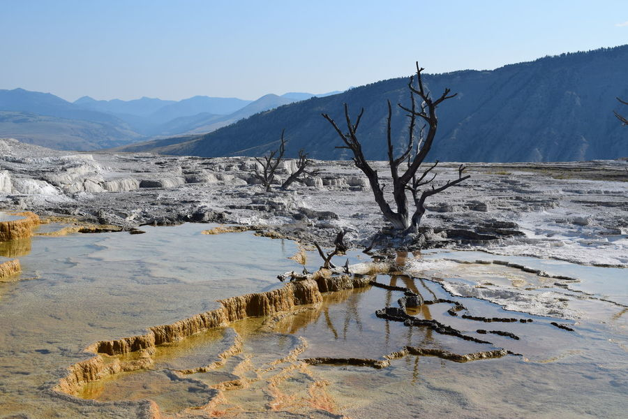 Another Planet Mammoth Hot Springs Area Thermophilic Bacteria Yellowstone National Park Bare Tree Beauty In Nature Landscape Mountain Range Physical Geography Tranquil Scene