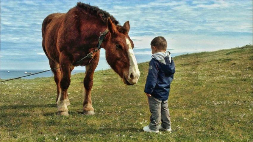 Child Childhood Domestic Animals Mammal Domestic One Animal Livestock