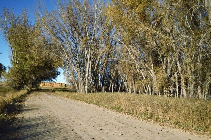 Hay bales stacked end of road Trees Outdoors Shadows Grass Fall Colors South Of Orin Junction Wyoming Tranquil Scene Empty Road Countryside Country Road The Way Forward Treelined