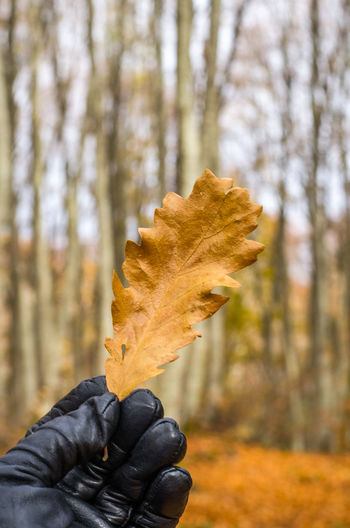Exploring the small mountain town of Krushevo in Macedonia Autumn Beauty In Nature Change Close-up Day Focus On Foreground Fragility Human Body Part Human Hand Leaf Maple Maple Leaf Nature One Person Outdoors People Real People Tree