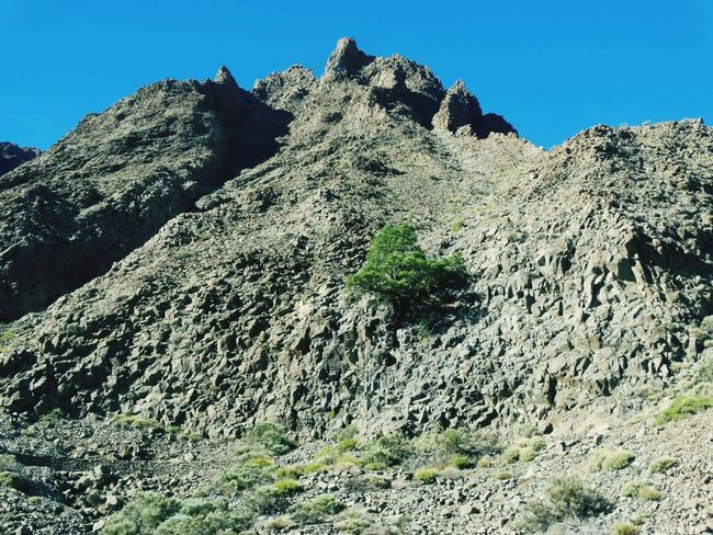 Mountain Rock - Object Mountain Peak Mountain Range Rock Formation Extreme Terrain Pinaceae Outdoors Travel Destinations Snow Low Angle View Sky Day Pine Tree Clear Sky Snowcapped Mountain Nature No People Landscape Physical Geography El Teide, Tenerife  El Teide National Parc Tenerife Island El Teide Climbing
