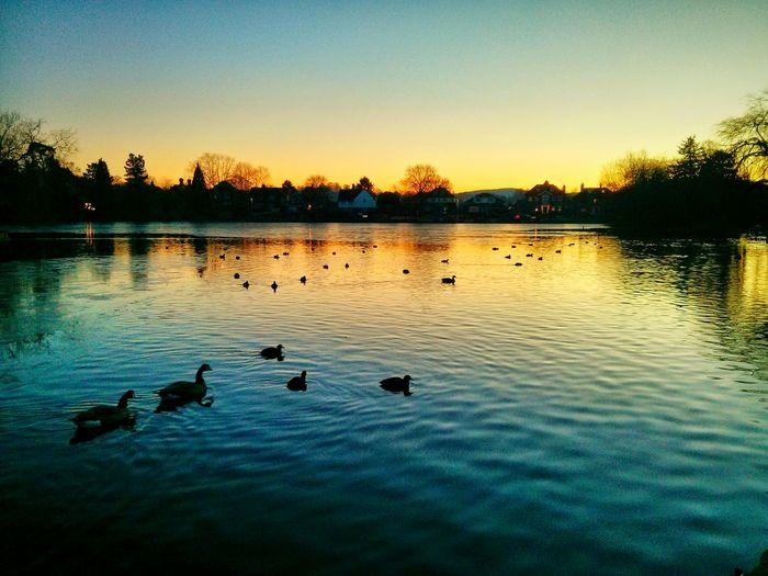 sunset over the freezing lake Sunset Lake Ducks Winter Petersfield