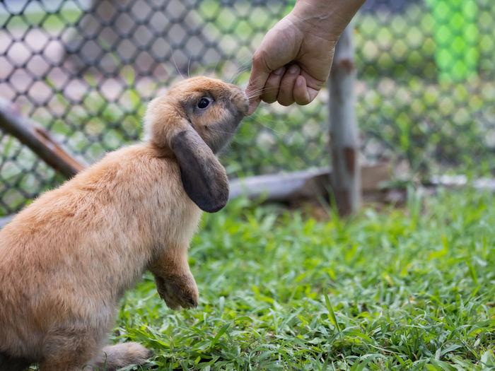 Full length of hand feeding in zoo
