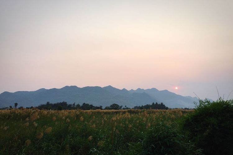 Nature Tranquil Scene Beauty In Nature Tranquility Mountain Scenics Tree Growth Landscape Field Rural Scene Outdoors Idyllic No People Mountain Range Agriculture Sunset Sky Day Thailand The Secret Spaces