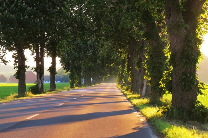 Tree Plant Road Transportation Direction Nature Sunlight Shadow The Way Forward Day Treelined Green Color Growth Tree Trunk Trunk No People Beauty In Nature Tranquility Outdoors Absence Diminishing Perspective