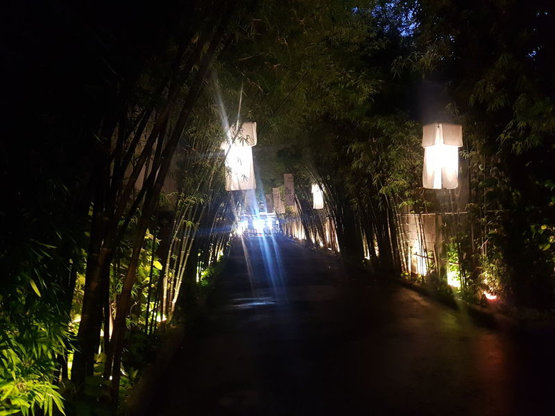 Way out of the wonderland Tree Illuminated Night No People Nature Walkway Way Of Light  Thailand Walk Out Walk Forward Latern Laterne Sky Outdoors