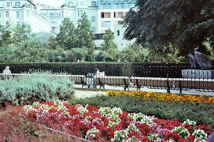 Film Photography Analogue Photography Streetphotography Kodak Tree Flower City Water Architecture Building Exterior Sky Built Structure Blooming In Bloom Petal Foreground