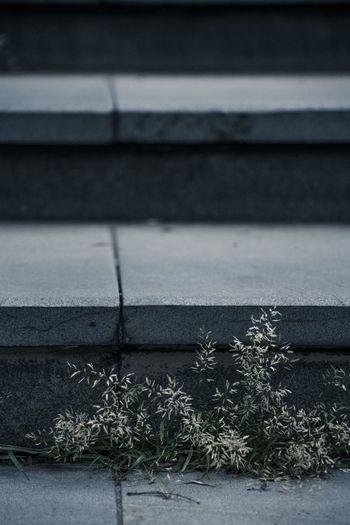 阶前无人植,砖缝草自发,摇摇识风雨,不做盆里花。 grass Plant Nature Outdoors Footpath Staircase Grass Stone