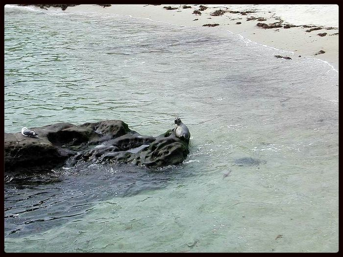 From My Point Of View Baby Seal Resting, Big Sur California