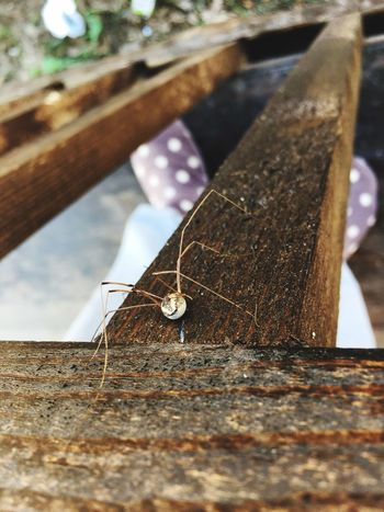 Wood - Material No People Animal Themes Insect Nature Day Close-up Outdoors Animals In The Wild Spider Outdoor Photography