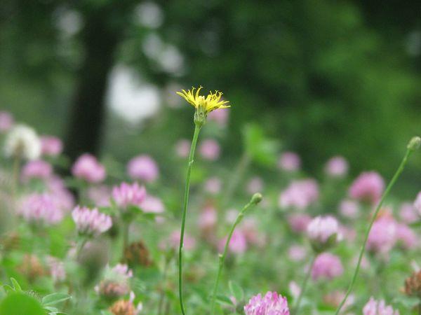 Japan Nature Flower Yellow Flower