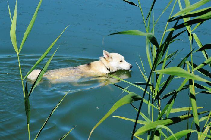 Pet Portraits Pet Dog Pet Photography  Animal Themes Lake Floating On Water