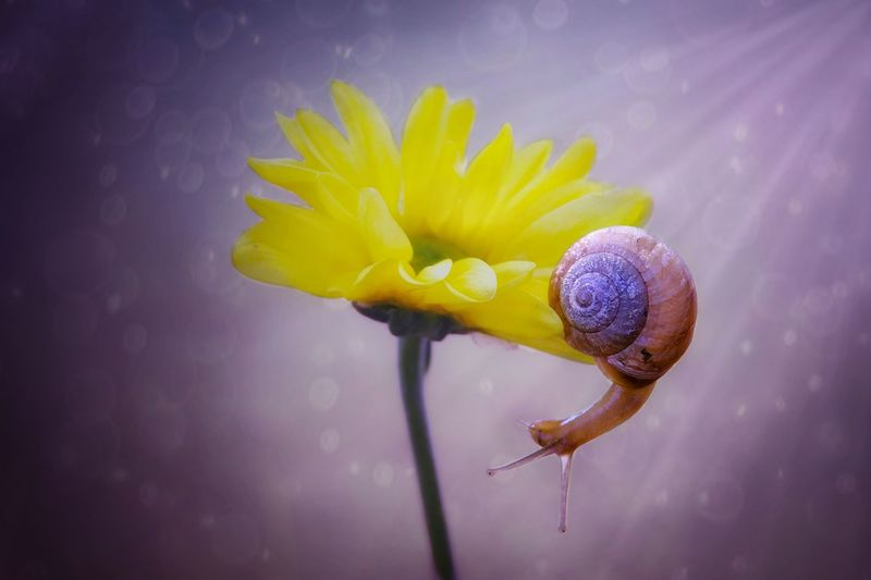 snail Fragility Flower Yellow Nature Petal Close-up Beauty In Nature Freshness Flower Head No People Indoors  Day