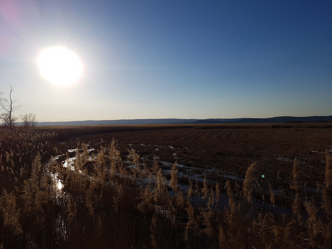 landscape, nature, beauty in nature, tranquil scene, tranquility, field, sun, scenics, sunlight, outdoors, no people, sky, clear sky, agriculture, rural scene, day