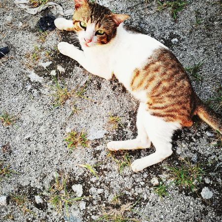 Domestic Animals Homeless Domestic Cat Pets Animal Themes Mammal One Animal Cat Homeless Cat Animal Huaweiphotography No People Homeless Cats Hua Wei P9 Plus Homelessness  Huawei P9 Plus HuaweiP9Photography Outdoors HuaweiP9 Homeless Kitten Kitten Animalphotography Homeless Animal Homelessness