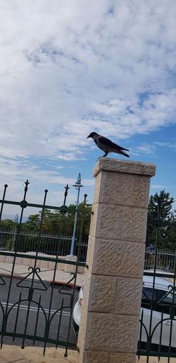Bird Metal Sky