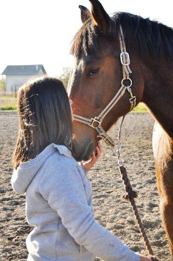 I Love My Horse Best  Sporthorse Holsteiner Love