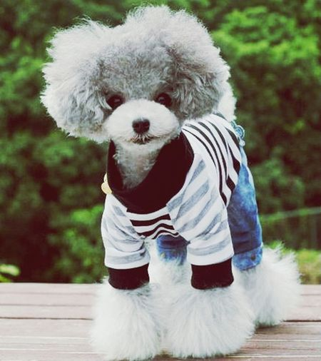 We love dog outfits! Send us your dog's Ootd and we'll post them and tag you in it :) Dogs Dog Fashion Cute Dogs