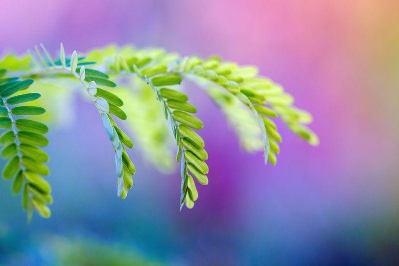 colours Plant