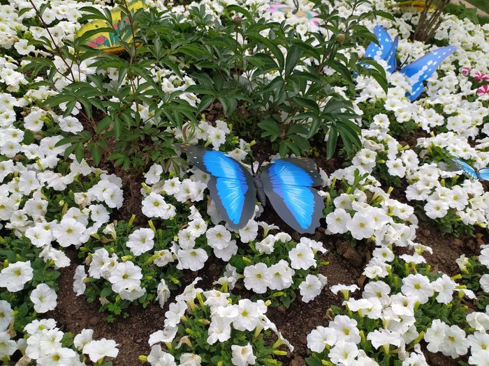 High angle view of butterfly on blue flowering plant