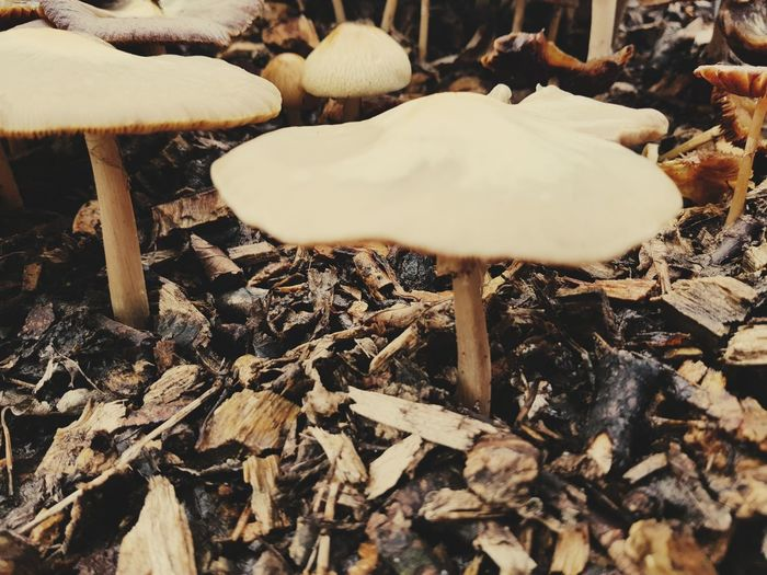 Mushrooms Nature No People Day Close-up Outdoors Mushroom Fungus Beauty In Nature Freshness Focus On Foreground The Week On EyeEm EyeEm Selects Taking Photos Beauty In Nature Nature Fungi Mushrooms Autumn Growth Plant Fragility