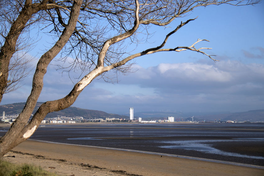 Water Sky Tree Architecture Built Structure Nature City Plant Building Exterior Bare Tree No People Sea Branch Land Day Beach Cloud - Sky Scenics - Nature Outdoors Skyscraper Office Building Exterior Swansea Swansea Bay