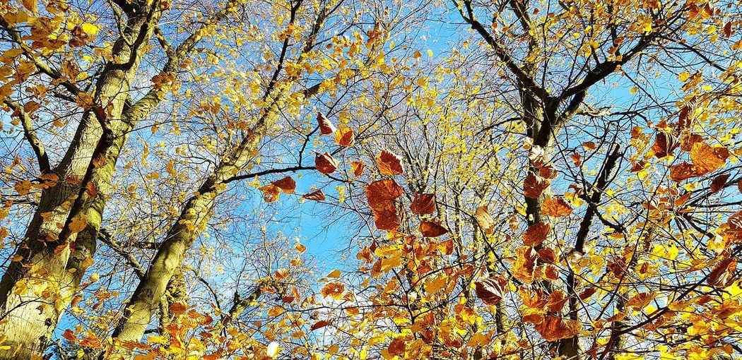 Leaves Autumn Leaves Walking Around Tree Backgrounds Full Frame Branch Pattern Sky Close-up Upward View