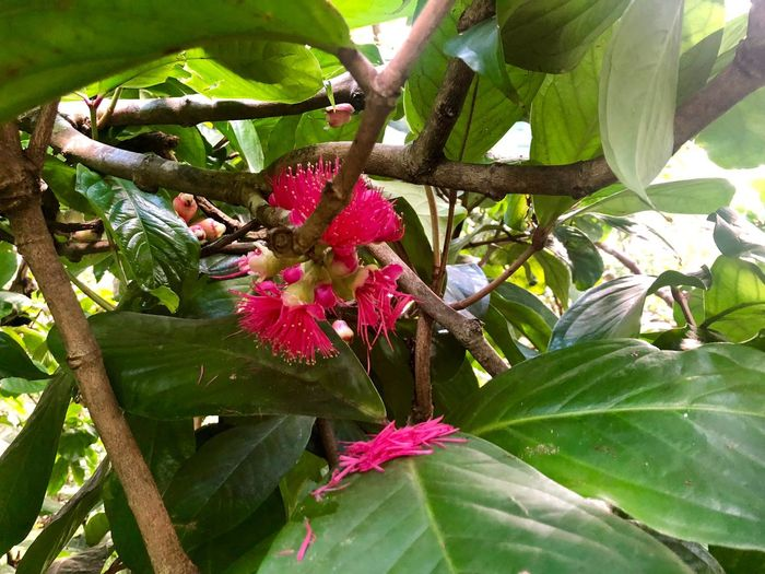 Plant Growth Plant Part Leaf Green Color Beauty In Nature Nature Flower Flowering Plant Fragility Branch