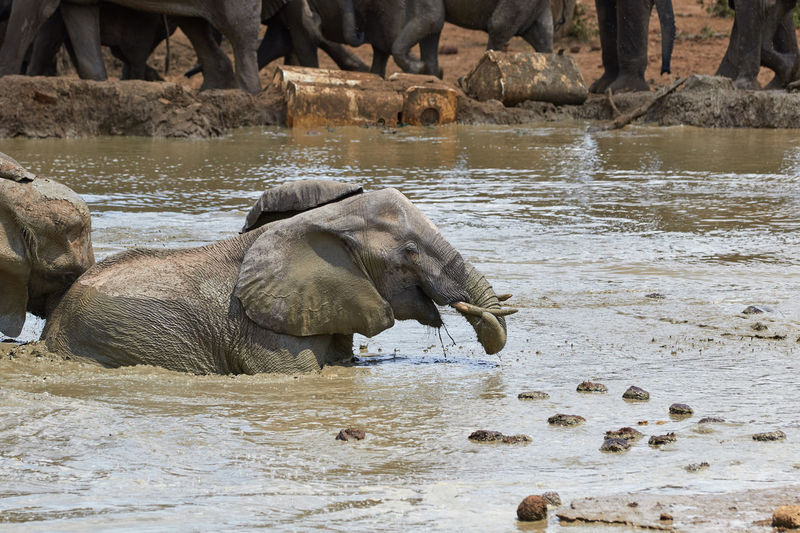 View of elephant drinking water from rock