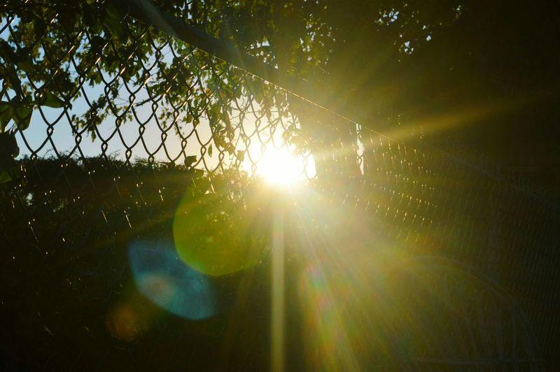 Sun Reflection Sun Star Bright Nature Sunlight Beauty In Nature
